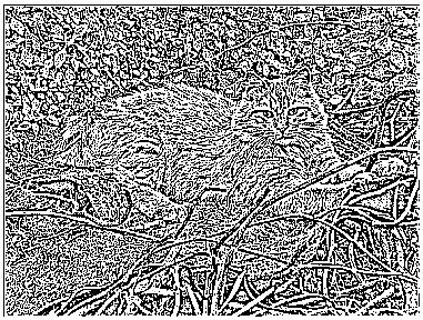 Immagine 47